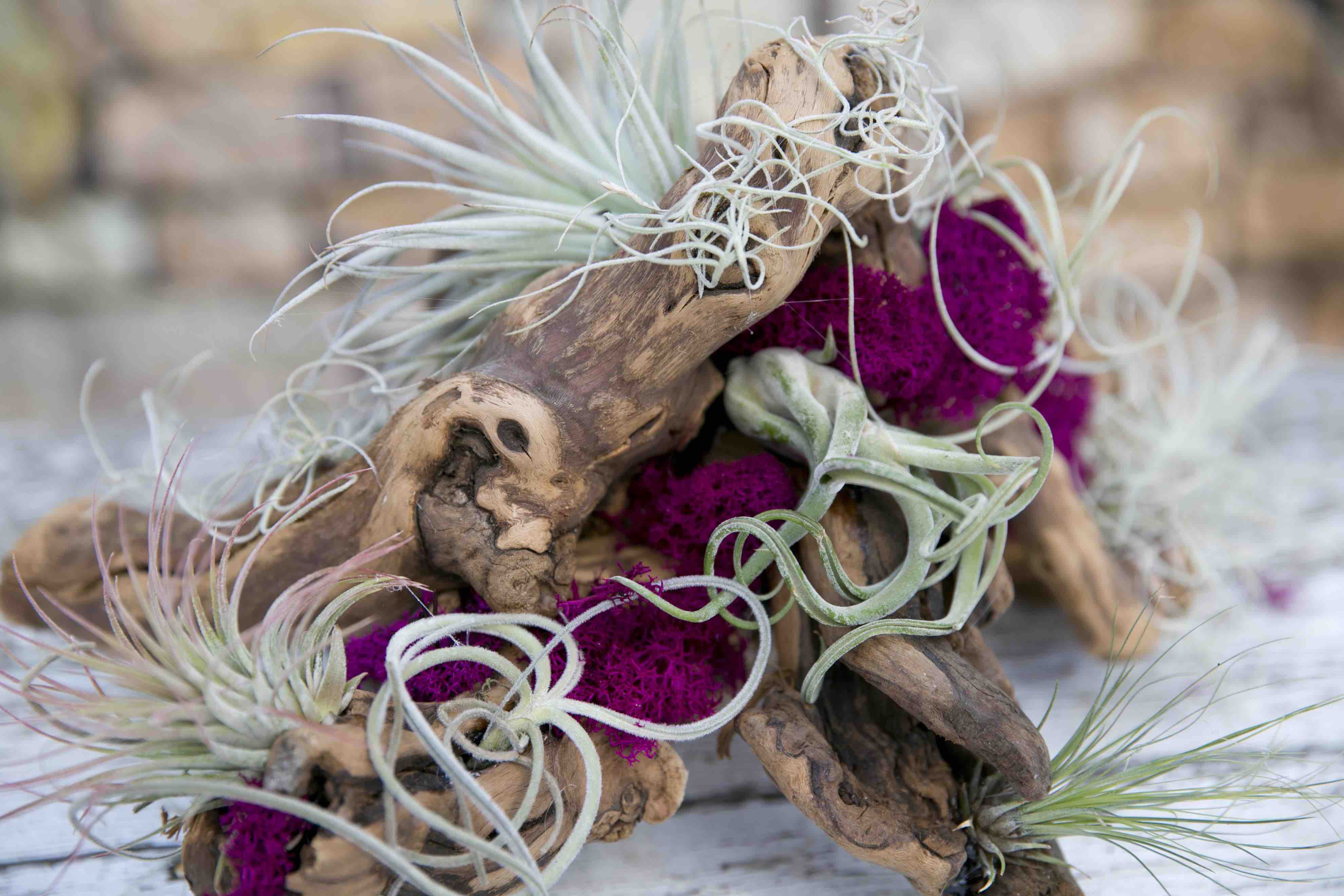 DIG Marketing Workshops Example Airplant Centrepiece