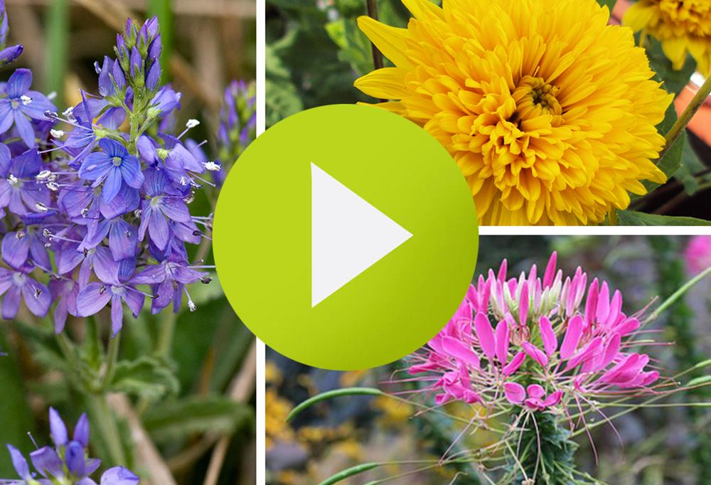 Video Filming ideas tips for garden centers promotional advertising social media DIG marketing